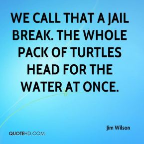 We call that a jail break. The whole pack of turtles head for the water at once.