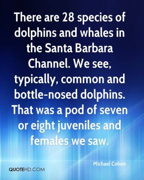 There are 28 species of dolphins and whales in the Santa Barbara Channel. We see, typically, common and bottle-nosed dolphins. That was a pod of seven or eight juveniles and females we saw.