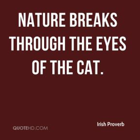 Nature breaks through the eyes of the cat.