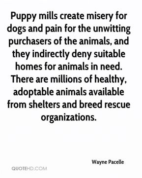 Wayne Pacelle  - Puppy mills create misery for dogs and pain for the unwitting purchasers of the animals, and they indirectly deny suitable homes for animals in need. There are millions of healthy, adoptable animals available from shelters and breed rescue organizations.
