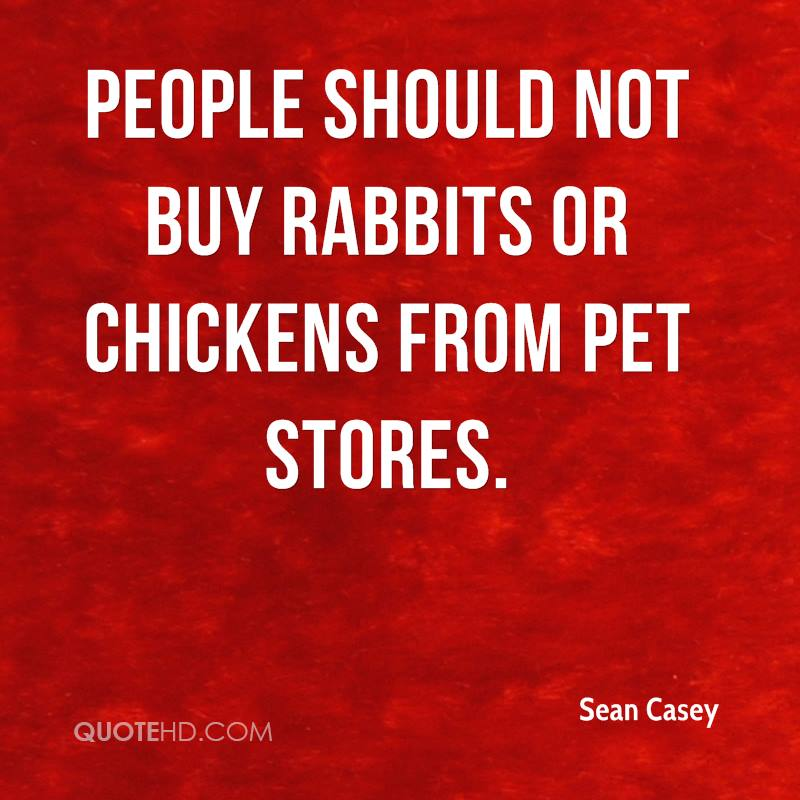 People should not buy rabbits or chickens from pet stores.