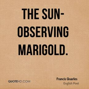 The sun-observing marigold.