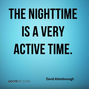 The nighttime is a very active time.