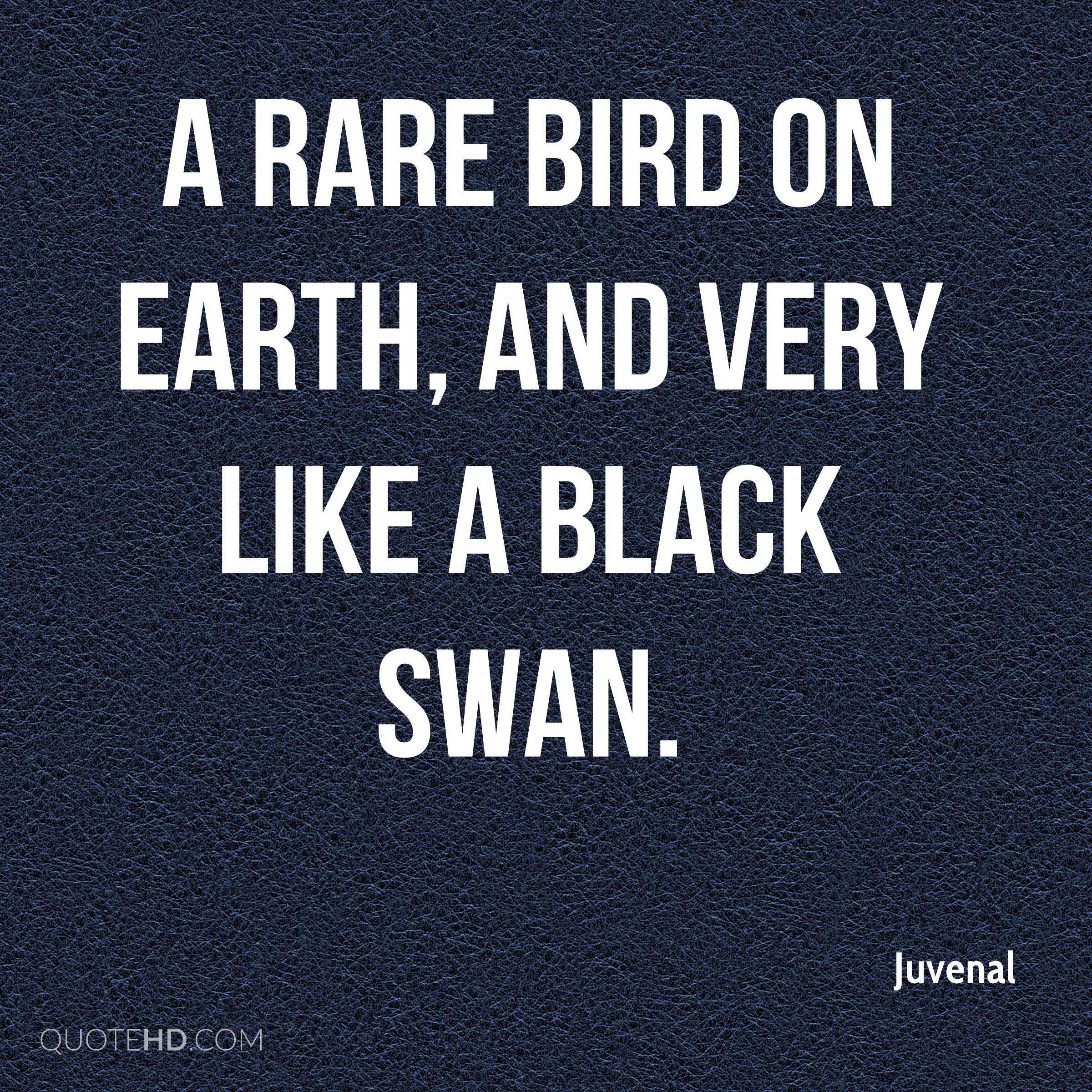 swan quotes