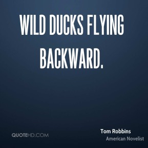 Wild Ducks Flying Backward.