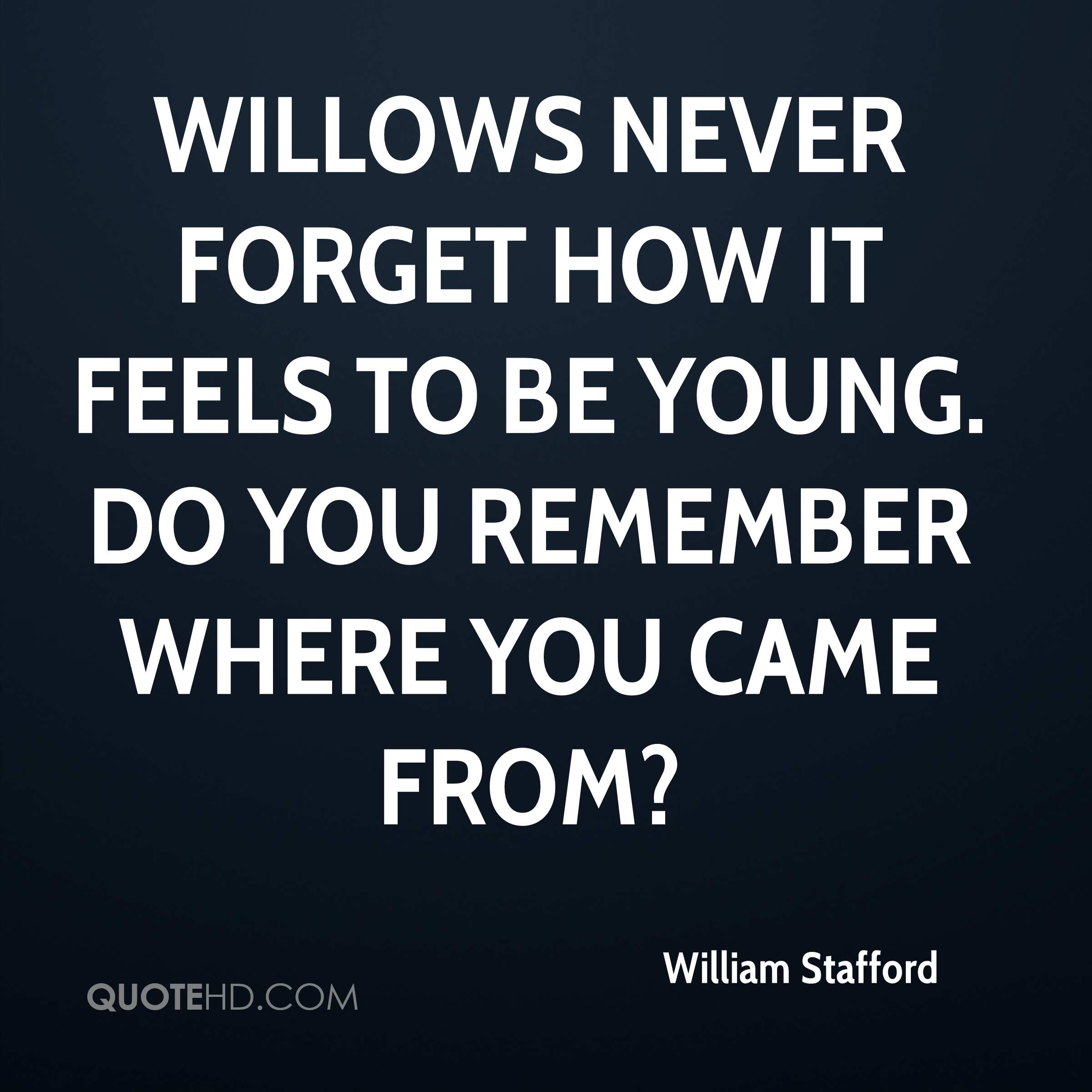 Willows never forget how it feels to be young. Do you remember where you came from?