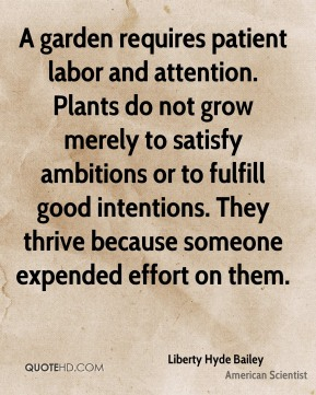 Liberty Hyde Bailey - A garden requires patient labor and attention. Plants do not grow merely to satisfy ambitions or to fulfill good intentions. They thrive because someone expended effort on them.