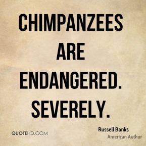 Chimpanzees are endangered. Severely.