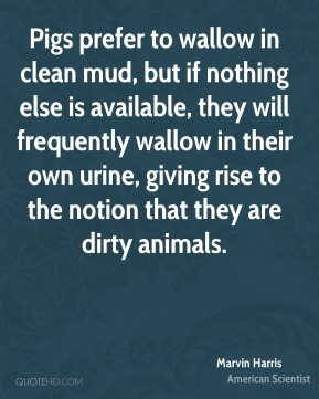 Pigs prefer to wallow in clean mud, but if nothing else is available, they will frequently wallow in their own urine, giving rise to the notion that they are dirty animals.