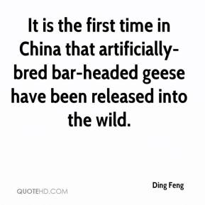 Ding Feng - It is the first time in China that artificially-bred bar-headed geese have been released into the wild.