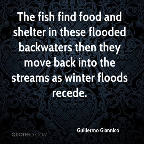 Guillermo Giannico - The fish find food and shelter in these flooded backwaters then they move back into the streams as winter floods recede.