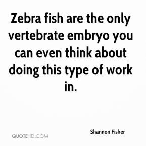 Shannon Fisher  - Zebra fish are the only vertebrate embryo you can even think about doing this type of work in.